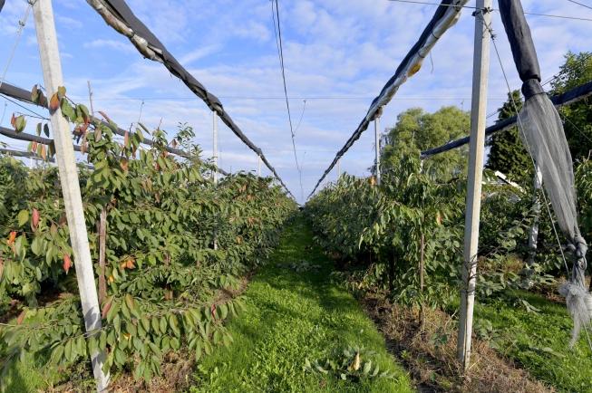 gorssel-gorsselse-enkweg-4154865-foto-48.jpg