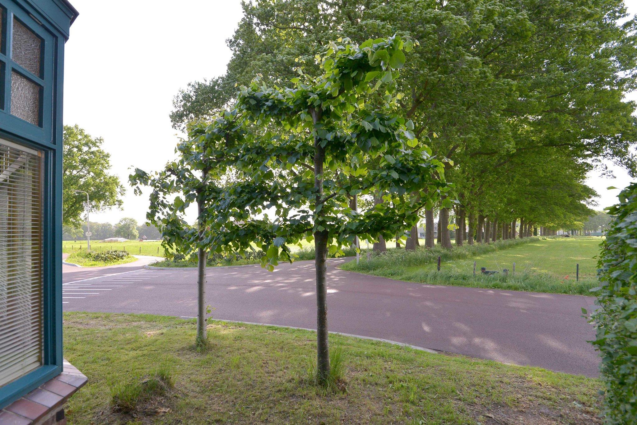 olst-boxbergerweg-4003964-foto-40.jpg