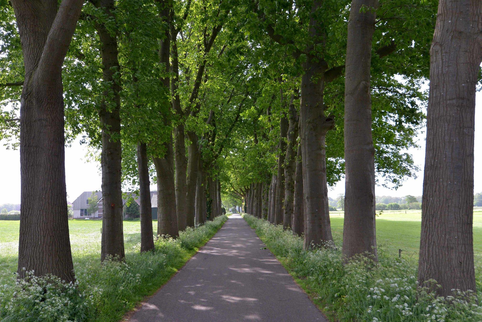 olst-boxbergerweg-4003964-foto-41.jpg